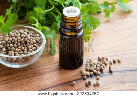 A dark bottle of coriander essential oil on a wooden table, with coriander seeds and fresh cilantro leaves in the background