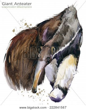 Giant anteater. hand draw wild animal watercolor illustration