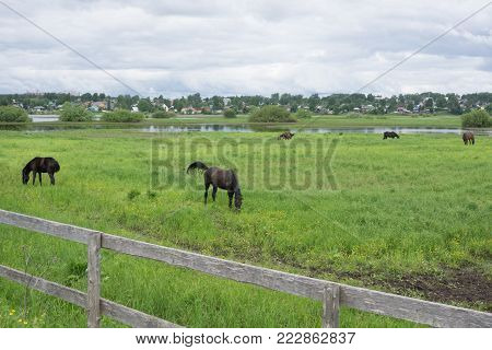 A young brown foal with a small white spot on a green and yellow summer meadow. Brown mother horse. Old rickety fence