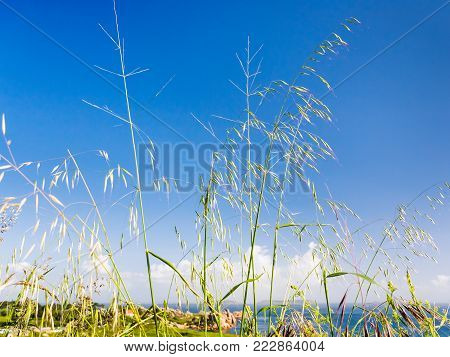 travel to France - meadow grass on coastline of English Channel in Saint-Guirec area of Perros-Guirec commune on Pink Granite Coast of Cotes-d'Armor department in north of Brittany in summer morning