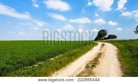 country landscape - country road along green lucerne field near village L'Epine Marne in sunny summer day in Champagne region of France