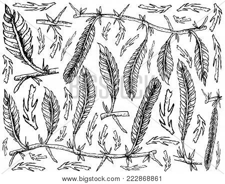 Sea Vegetables, Illustration Background of Hand Drawn Sketch Killer Algae or Caulerpa Taxifoli Seaweed. High in Calcium, Magnesium and Iodine.