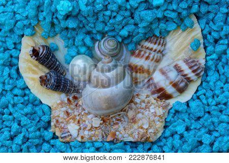 small shells and a pearl in blue small stones
