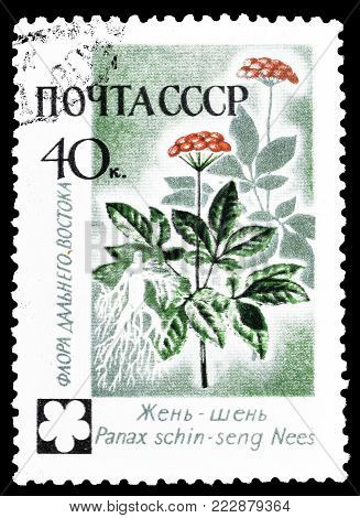 SOVIET UNION - CIRCA 1960 : Cancelled postage stamp printed by Soviet Union, that shows Panax schin seng Nees.