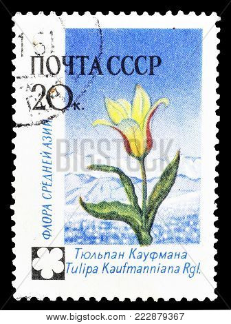 SOVIET UNION - CIRCA 1960 : Cancelled postage stamp printed by Soviet Union, that shows Tulip.