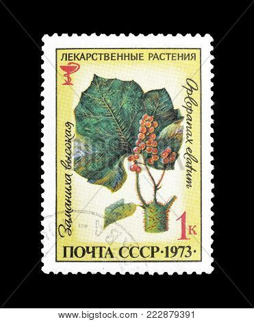 SOVIET UNION - CIRCA 1973 : Cancelled postage stamp printed by Soviet Union, that shows  Echinopanax elatum.