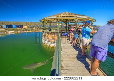 Denham, Australia - Dec 20, 2017: tourists admire marine environment and various species of Australian sharks at Ocean Park Marine Life Aquarium, Coral Coast, Shark Bay in Western Australia.
