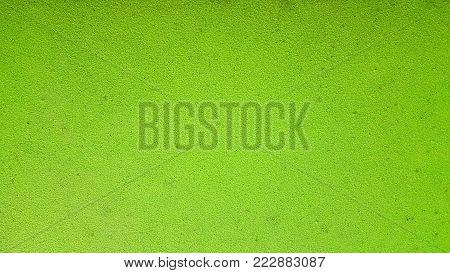 Green Background. Wolffia globosa or Fresh water Alga, Water Meal, Swamp Algae is local food for Thailand.