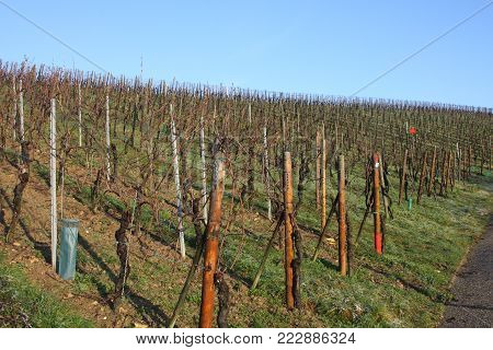 Vineyards against a blue winter sky, Luxembourg