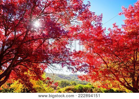 Beautiful peaceful autumn scene in the park with sun shining through tree branches