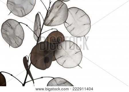 Unusual leaves with a tip in backlight. Texture of leaves isolated on white background. ecological style, natural materials. branch with leaves