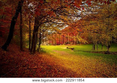 Splendor of colors in a beautiful autumn forest