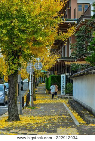 Kyoto, Japan - Nov 28, 2016. Street With Autumn Trees In Kyoto, Japan. Kyoto Was The Capital Of Japa
