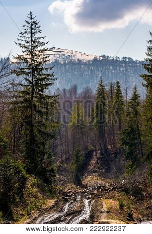 dirt road through brutal deforestation area. sad scenery of poor nature environment. summy springtime day in mountains with snowy peak