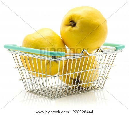 Three yellow quince in shopping basket isolated on white background raw fresh
