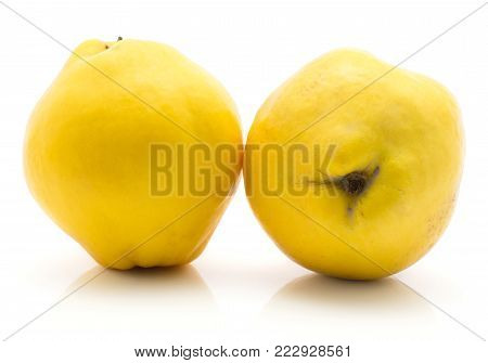 Two yellow quinces isolated on white background raw ripe poster