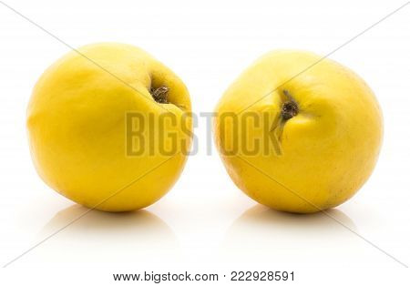 Two quinces isolated on white background yellow raw ripe