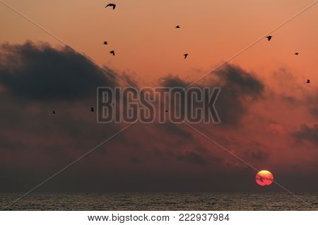 Birds flying over the sea on the background of a colorful spherical sun that has just risen.