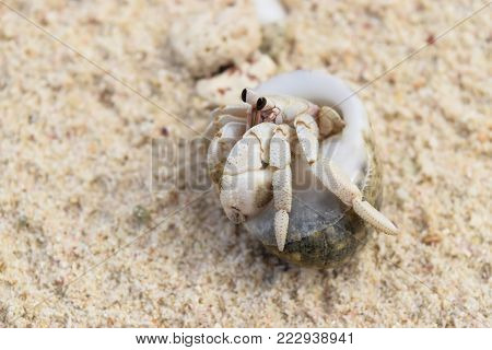 Close up hermit crab photo on the beach in Seychelles, Mahe island