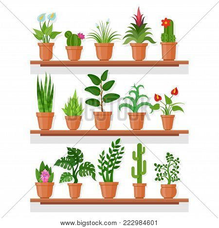 Indoor plants on shelf. Indoor plant garden display at house or apartment, office eco decor. Vector flat style cartoon illustration isolated on white background