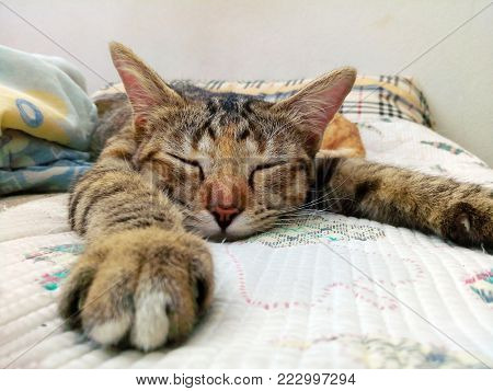 Close portrait of adorable male tabby cat relaxing and sleeping comfortably on the couch.