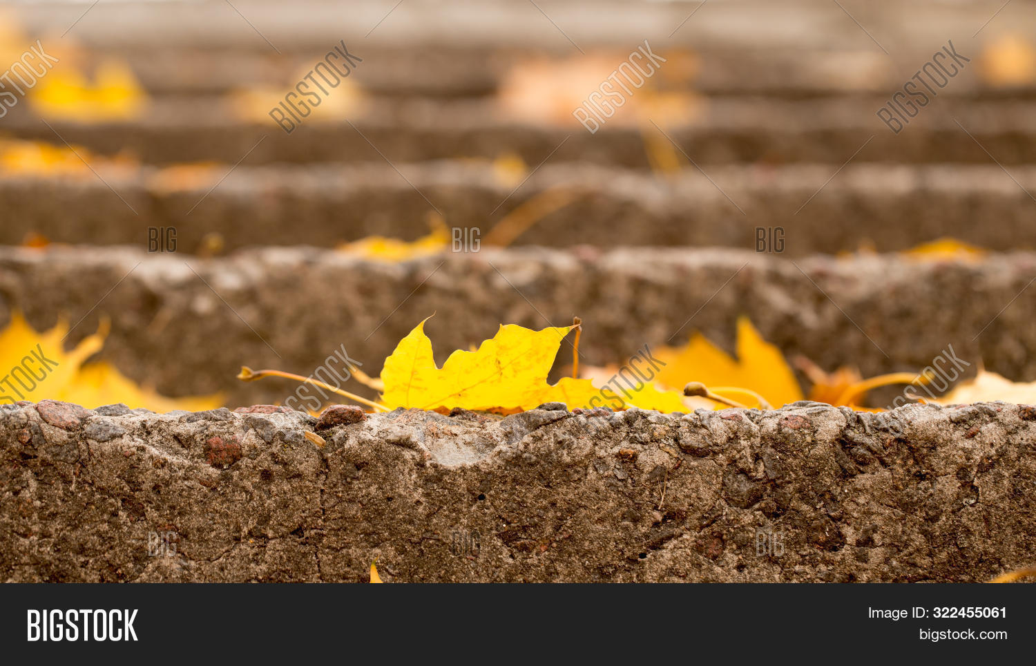 Bright Autumn Leaves With Beautiful Shades Of Gold