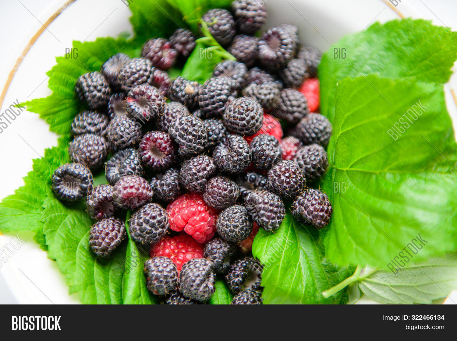 Berries On Green Leaves. Black Raspberries With Red. Berries. Vitamins From Berries.