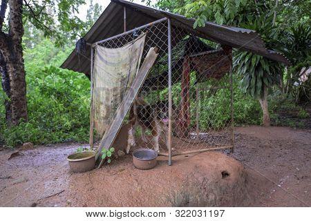 Thai Dog Bangkaew Locked In The House