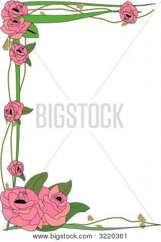 Tall Rose Border