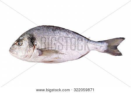 Raw fresh dorado fish isolated on white background. Gilt-head bream poster