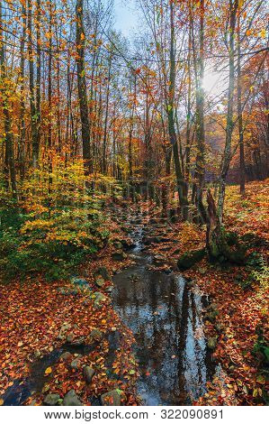 Water Stream Among The Rocks In The Forest. Great Autumnal Scenery. Sun Behind The  Colorful Foliage