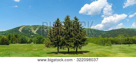 Row Of Trees On Foreground Mountains With Vast Blue Sky On Background In Sunny Day In Summer Time. N