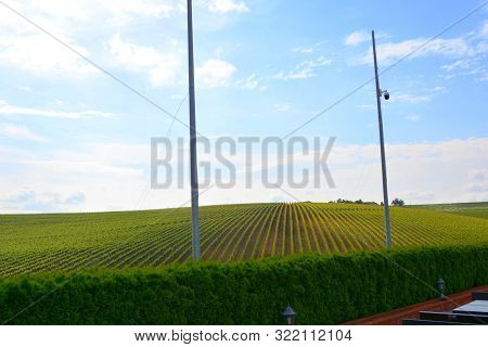 View Over The Vineyards Of Recas, Banat. View Of The Hills On Which Is Located In Recas, Banat