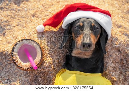 Adorable Black And Tan Dachshund Dog, Buried Under Sand On The Beach, Resting And Relaxing On A Seas