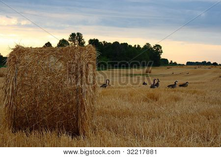 bale of starw or hay against clear blue sky