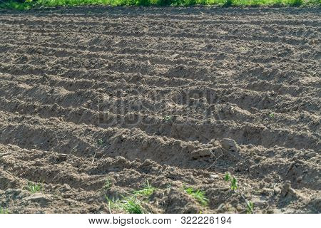 Furrows of black earth on the field in the spring. Preparing the soil for planting seeds. poster