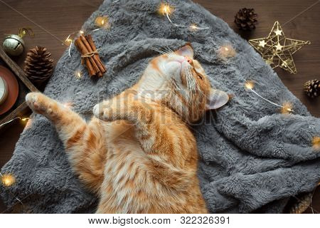 Christmas Mood With Ginger Cat