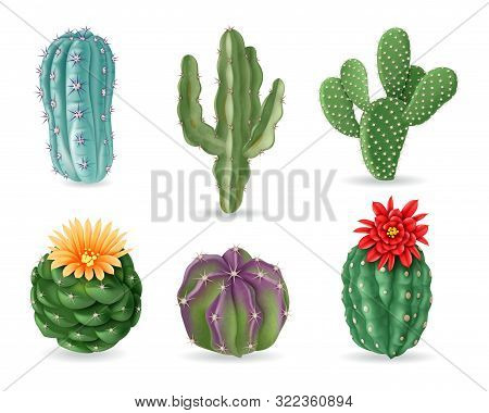 Realistic Cactuses. Decorative Desert Exotic Cactus Prickly Plants. Wild And Houseplant Succulent Ca