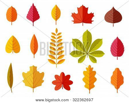 Fall Leaves. Colorful Autumn Leaves, Leaf Chestnut Elm Oak, Maple Forest With Yellow And Orange Foli