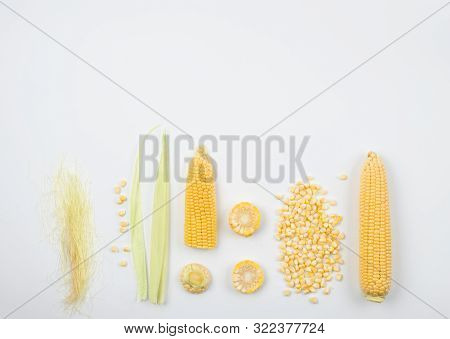 Ear Of Maize,maize Kernels,corn Silk And Stigma  For Doing Tea And Herbal Drug.summer Vegan Snack. H