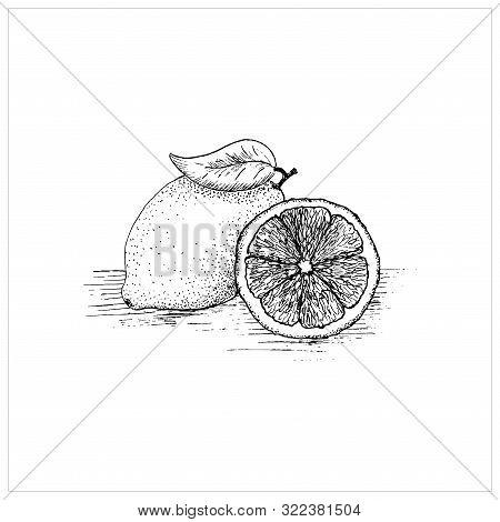 Lemon Sketch. Hand Drawn Sliced Lemon, Black Vector Illustration On White Background