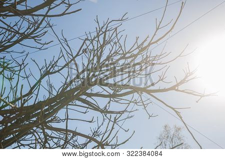 Silhouette, Beautiful Bare Tree Branches Against Cloud Blue Sky, Background On Sunny Day In Winter,