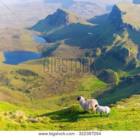Sheep In Mountain, Isle of Skye, Scotland, United Kingdom, Panoramic view On Isle of Skye