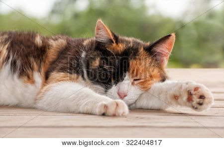 Calico cat sleeping peacefully on a wooden porch