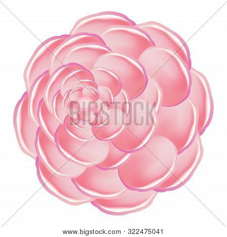 Pink Camellia Icon. Cartoon Of Pink Camellia Vector Icon For Web Design Isolated On White Background