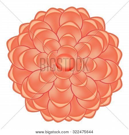 Spring Red Camellia Icon. Cartoon Of Spring Red Camellia Vector Icon For Web Design Isolated On Whit