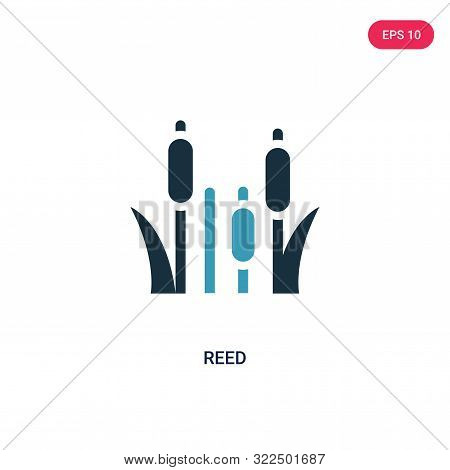 reed icon in two color design style.