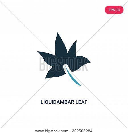 liquidambar leaf icon in two color design style.