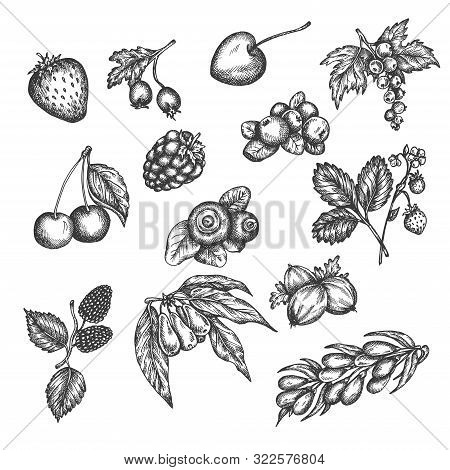 Berry Hand Drawn Vector Set. Sketch Of Fruits Vector Illustration. Berries Engraving Gooseberry, Ras
