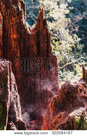 Tree Trunk In Rainforest Setting With Moss Steaming From The Hot Sunshine